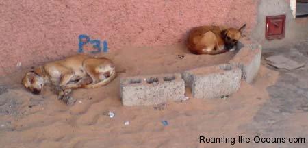 23_Dogs_Cape_Verde.jpg