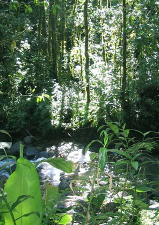 04_Martinique_Walking_Rain_Forest.jpg