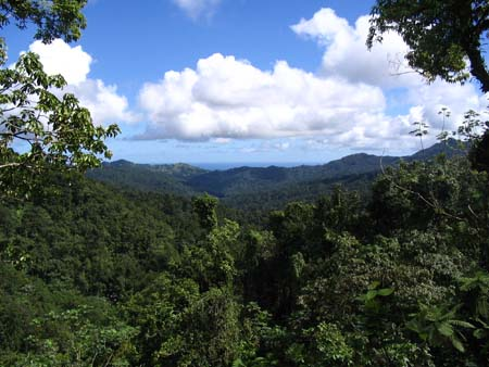 05_Martinique_Overtop_Rain_Forest.jpg