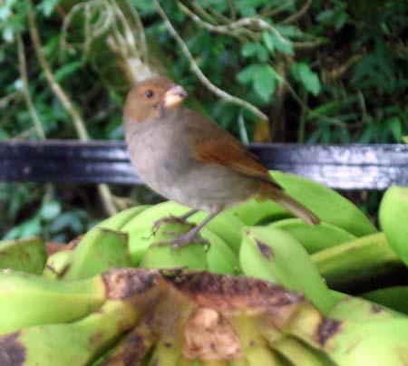 35_StLucia_Diamond_Gardens_Bird_1.jpg