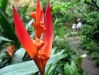 29b_StLucia_Diamond_Gardens_Flower_1.jpg