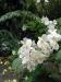 29c_StLucia_Diamond_Gardens_Flower_2.jpg