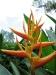 31_StLucia_Diamond_Gardens_Flower_4.jpg