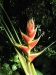 33_StLucia_Diamond_Gardens_Flower_5.jpg