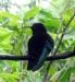36_StLucia_Diamond_Gardens_Bird_2.jpg