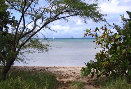 01_Martinique_South Headland Walk_1.jpg