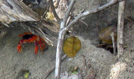 04_Crab_and_his_hole_Martinique.jpg