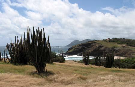 05_St_Lucia_Walk_Cacti.jpg