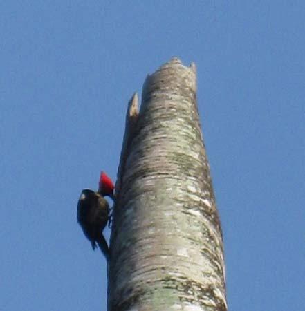 05_Woodpecker.jpg