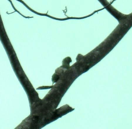 10_Parrot.jpg