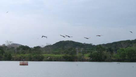 12_pelicans.jpg