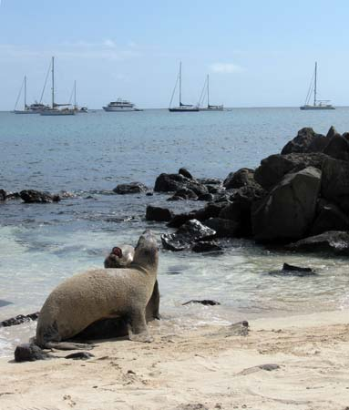 01_Wreck_bay_sealions.jpg