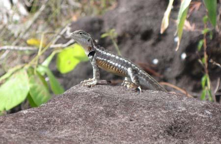 11_Lizard.jpg