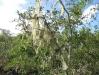 22_Lichen_on_trees.jpg