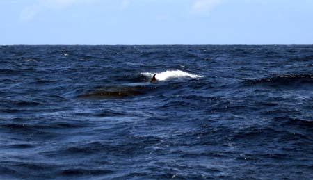 06_Minke_Whale.jpg