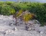 23_Coconut_Seedlings.jpg