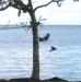 13 Birds South Tahiti Nui.jpg