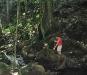 14 South Tahiti Waterfall walk 1.jpg