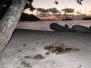 Moorea, Society Islands