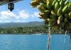 01 Asau with Bananas from Apia.jpg