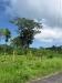 04 Banyan tree.jpg