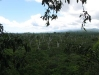 06_dead trees from 90 91 cyclones.jpg