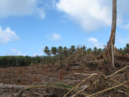 06 Coconut wood destruction 2.jpg
