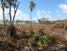 05 Coconut wood destruction 1.jpg