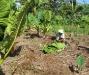17 Plantation.jpg