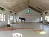 28 Horse checks out clean community centre.jpg