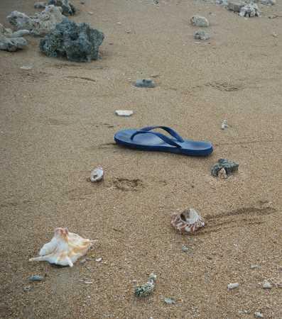41_Shells_Lamen_Island_Epi