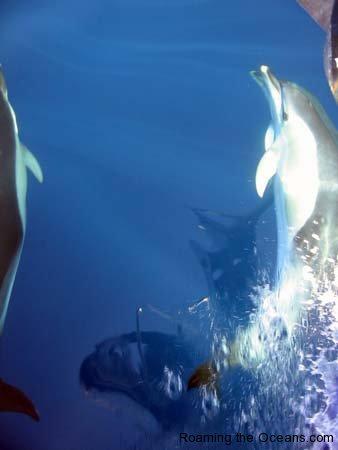 03_dolphins_1_33.jpg