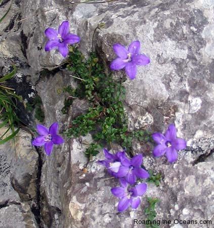 07_blue_flower.jpg
