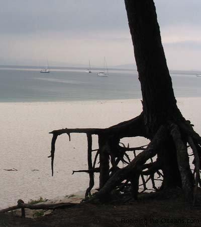 13_Islas_Cies_Tree_roots_33.jpg