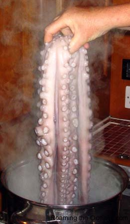 004_Pulpo_In2_73.jpg